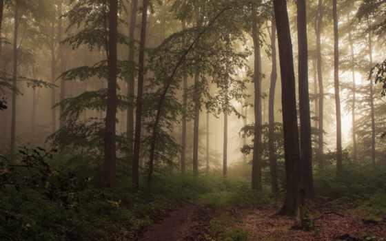 wood, woods, туман, platz, flickr, die, jerdess, eifel, deutschland, der, фотограф,