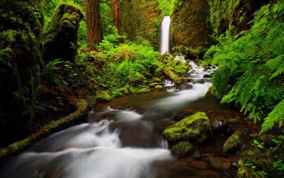 природа, леса, водопады