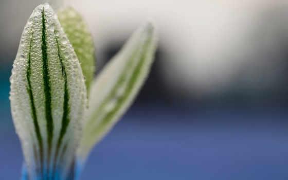makro,росток, капли, роса, цветок,