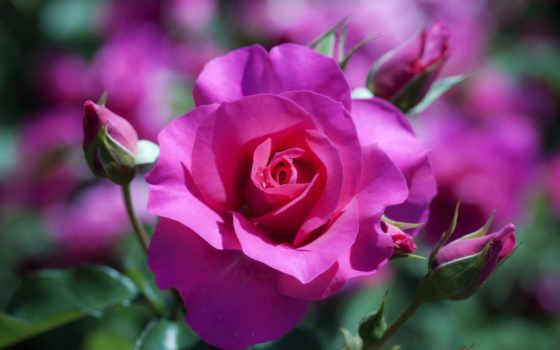 красивые, cvety, очен, летние, фотографий, незабываемо, подборка, видов, rar, красивыми, цветочки,
