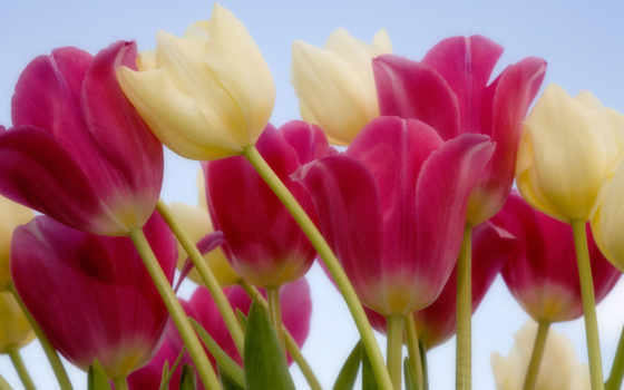 flowers, цветы, devushki