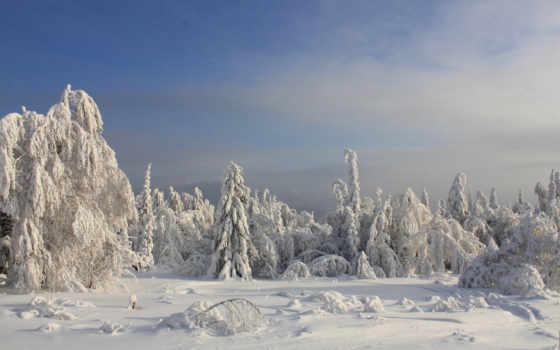 winter, снег, trees, сугробы, красивые, landscape, пейзажи -, favourite, нашем, фотографий, windows,