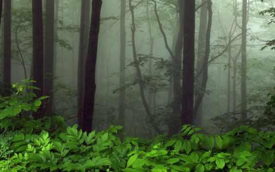 презентация, за, thank, внимание, лес, мужчина, prezentacii, урока,