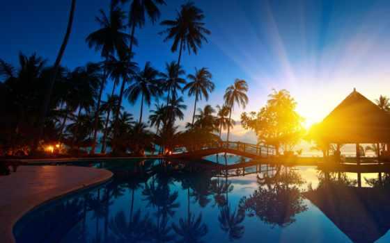 пальмы, бассейн, water