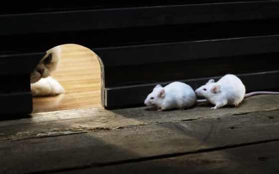 прикольные, кот, mouse, смешные, funny, коты, мыши,