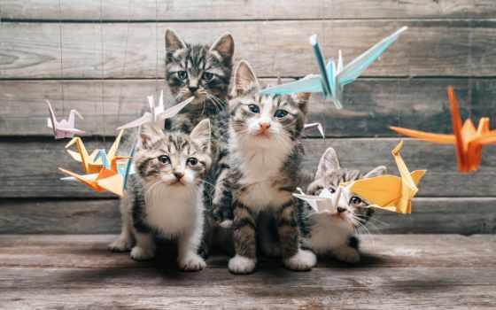 кот, cats, команда, tail, четверо, оригами, tomcat, whiskers, изучение,