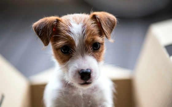 щенок, друг, собака, взгляд, desktop, collector,