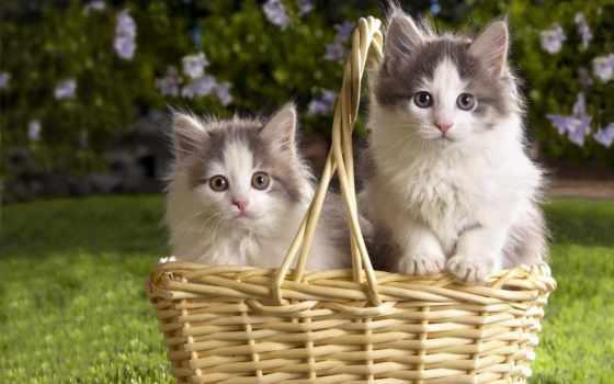 кошки, cats, самый