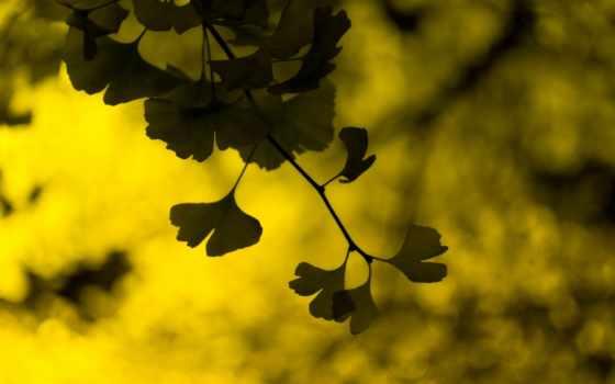 листья, widescreen, размытость, фон, макро, листочки, листва, изображение, картинка,