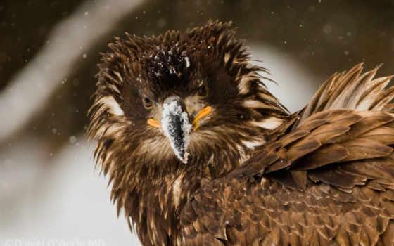 взъерошенный, birds, птица