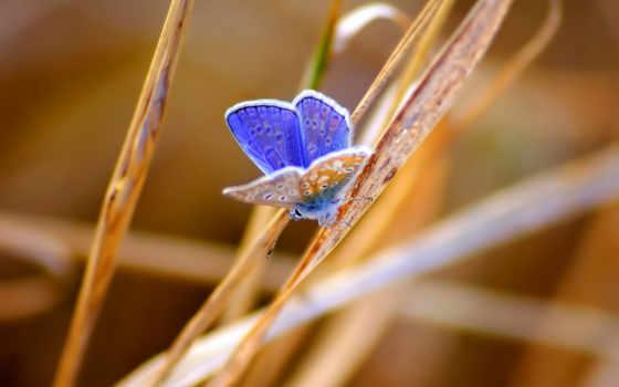 weevil, nettle, bug, бабочка, мотылек, крылья, smartphone, насекомое,