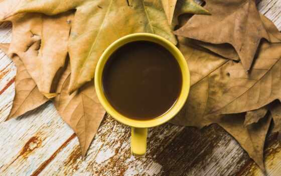 cup, coffee, mac, пост, осень, leaf, explore