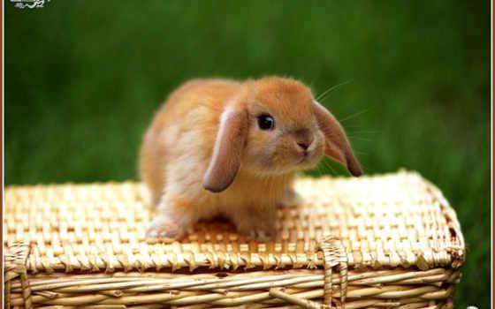 кролики, маленькие,