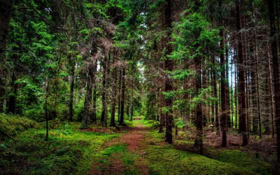 деревья, природа, леса