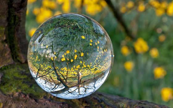 les, cvety, voda, желтые, мох, капля, линза, shar,