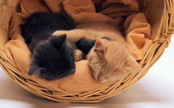 kittens, спящие, black
