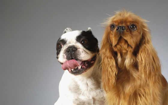 смешные, собаки, заставки