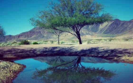природа, пруд, кусты, water, дерево, сайте, улучшить, качество, нашем,