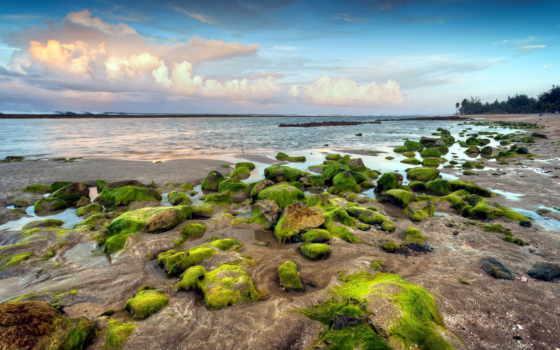 море, берег, растительность, world, underwater, скалы, валуны, небо, замшелые, мох, fish,