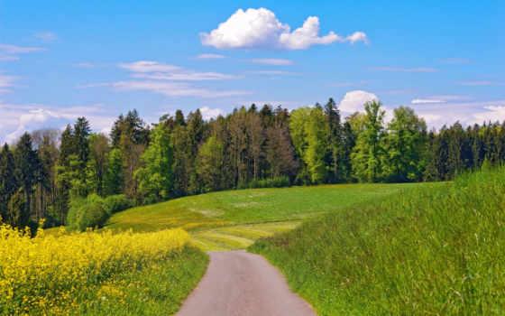 дорога, поле, цветы, trees, oblaka, summer, небо, лес, холмы,