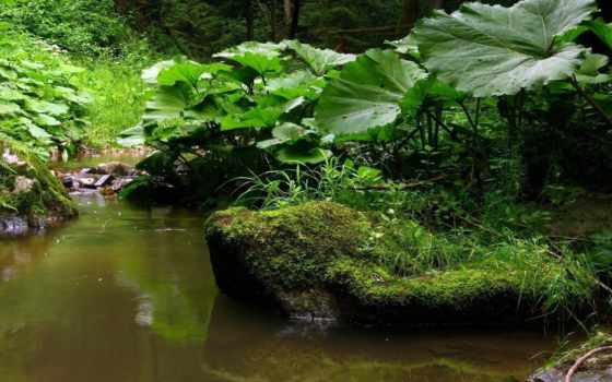мох, камни, зелёный, лес, листва, ручей, трава, весна,