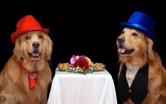 tarjetas, pinterest, perros