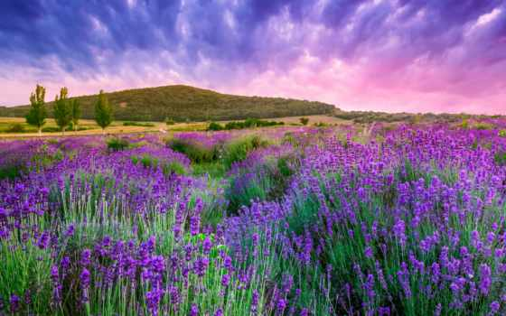 lavender, cvety, природа, landscape, поле, небо, rising,