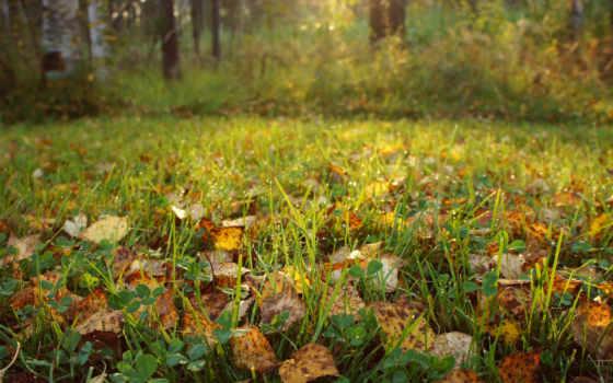 осень, природа, листва, трава, растения, роса, солнечные, rays, капли,