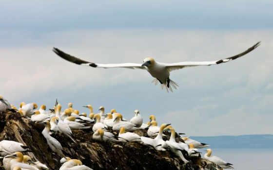 птицы, комменты, desktop, birds, tapety, прибрежные, бакланы, чайки,