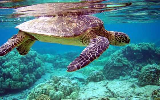 world, underwater, черепаха,