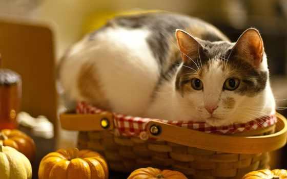 кот, cats, тыква, feeding,