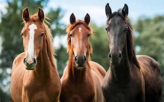 лошади, млекопитающее