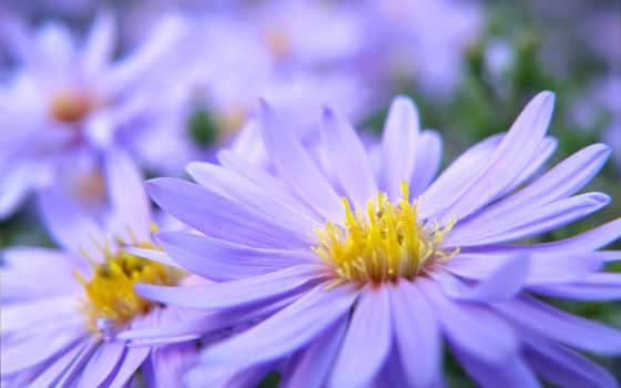 цветы, макро, качестве