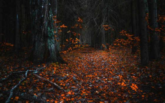 лес, осень, bobbym, free, favim, природа, photography,