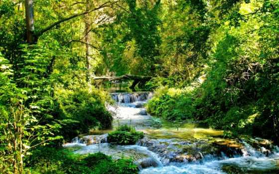 ручей, лес, trees, зелёный, свет, река, потоки, солнечно,