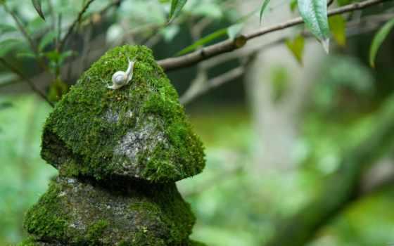 мох, камни, snail, зелёный,