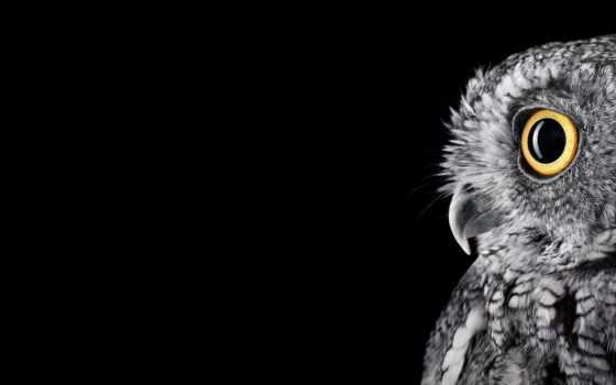 сова, свет, перья, моноблок, чб, newwallpapers, inch, совы, microsoft, surfacestudio,