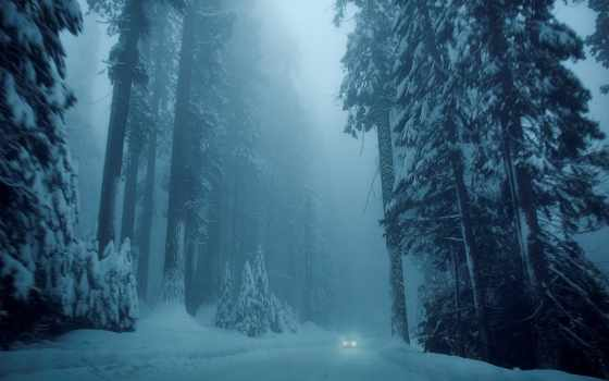 туман, лес, winter, лесу, пользователя, природа, коллекция,