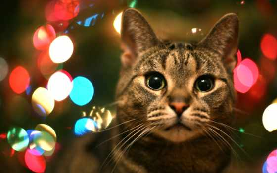 кот, коты, кошки, christmas, котята, мужской, дек, год, столе, рабочем,