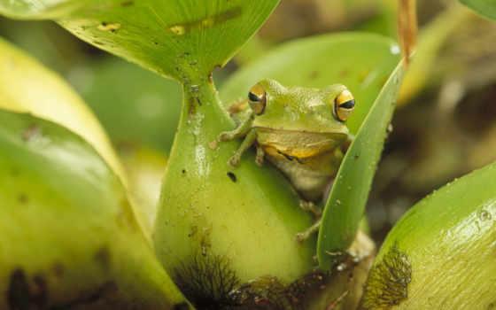 лягушка, лягушки, frogs, images, jpeg, photos, дерево,