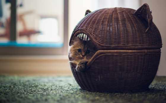 кошки, lodge, кошек, руками, своими, домики, сделать, лежаки, video, лежак,