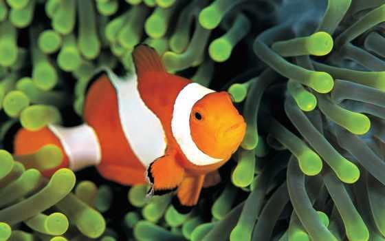 взгляд, artwalls, фотообои, fish, pisces, magazine,