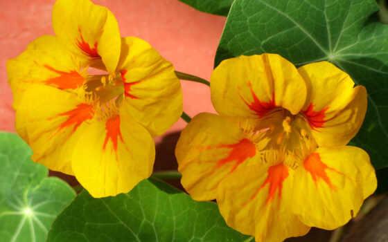 цветы, wallpapers Фон № 8147 разрешение 2500x1762