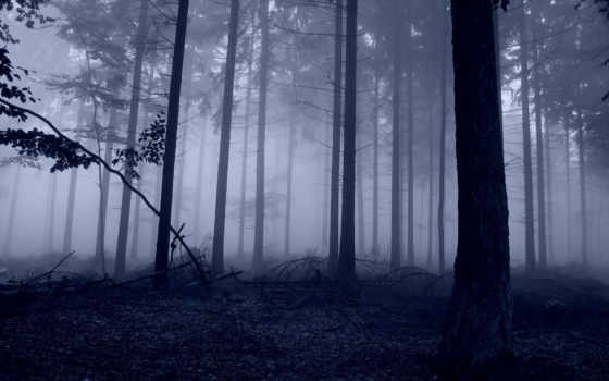 природа, деревья Фон № 26009 разрешение 1920x1200