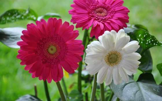 цветы, планом, крупным