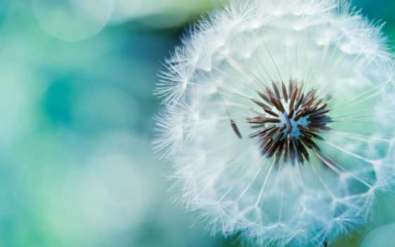 instagram, hoa, tuyệt