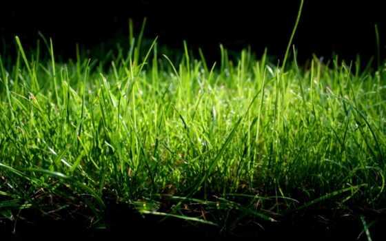 трава, зелёная, совершенно