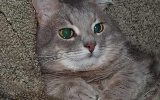 картинка, zhivotnye, кошки
