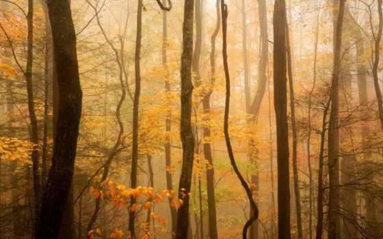 лес, осень, тумане, plants, природа,