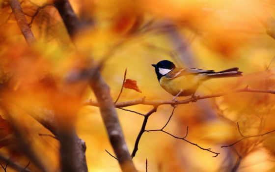 осень, tit, дерево, птица, собака, zhivotnye, ветки, кресло, друг, красивые,